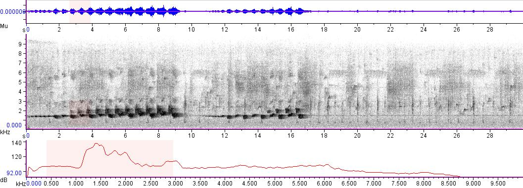 Sonogram of recording #AV 4842