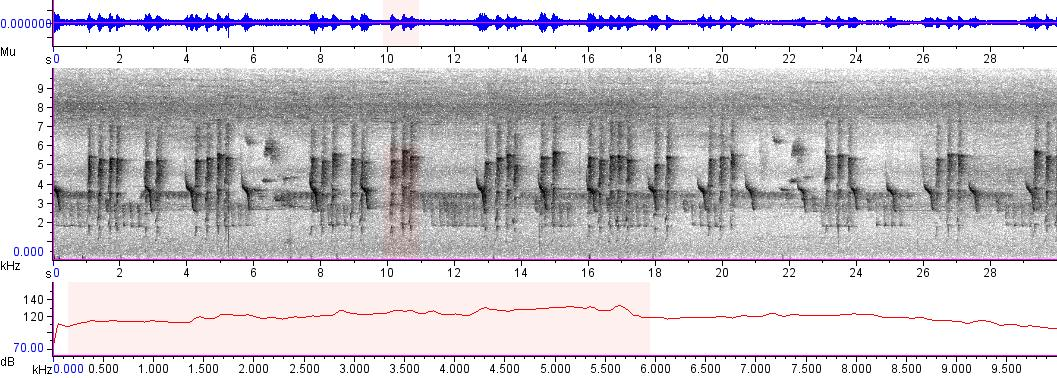 Sonogram of recording #AV 4856