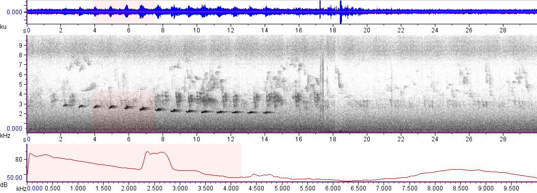 Sonogram of recording #AV 4890