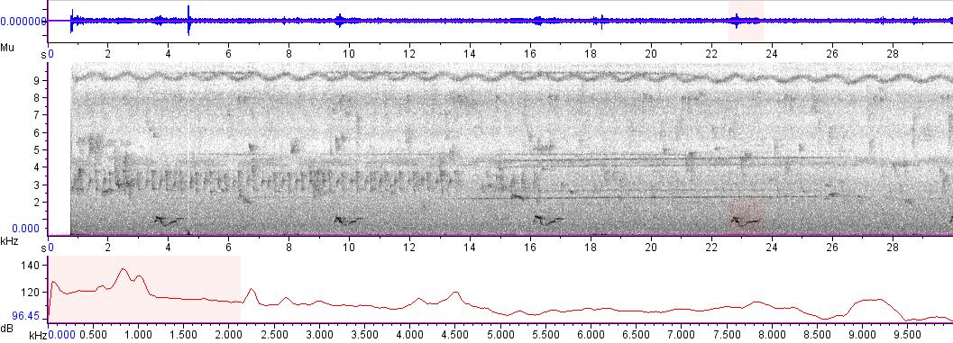 Sonogram of recording #AV 4905