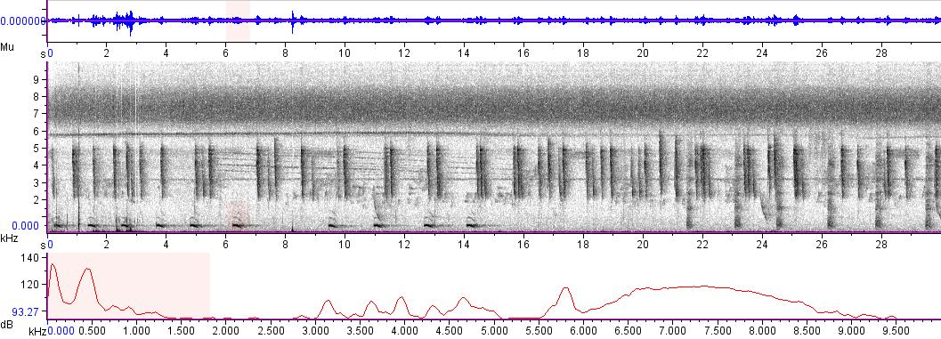 Sonogram of recording #AV 4918