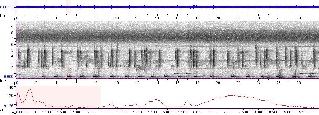 Sonogram of recording #AV 4920