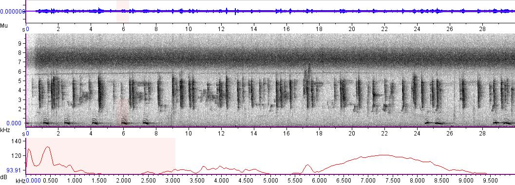 Sonogram of recording #AV 4921