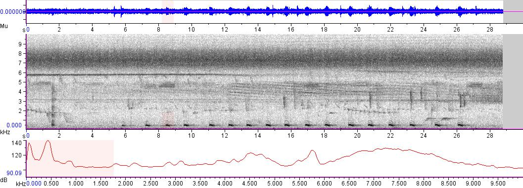 Sonogram of recording #AV 4922