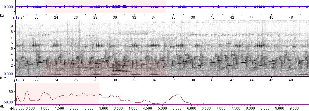 Sonogram of recording #AV 4956