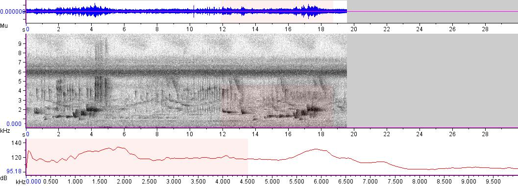 Sonogram of recording #AV 4986