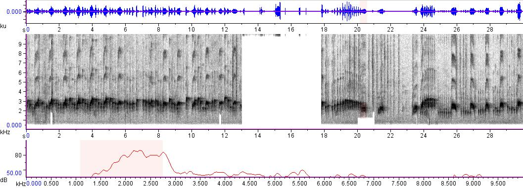 Sonogram of recording #AV 565