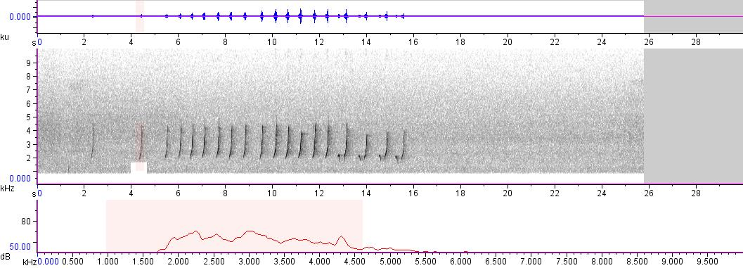 Sonogram of recording #AV 579