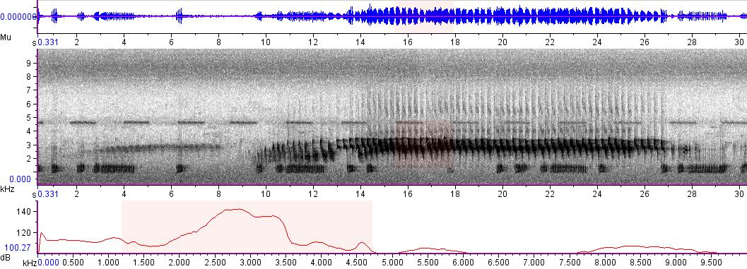 Sonogram of recording #AV 5003