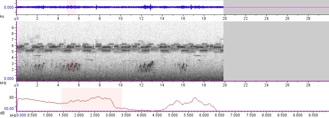 Sonogram of recording #AV 5005