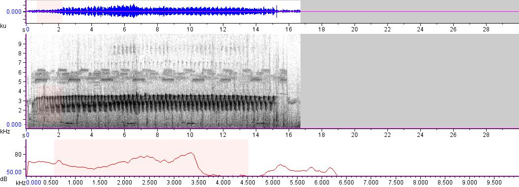 Sonogram of recording #AV 5006