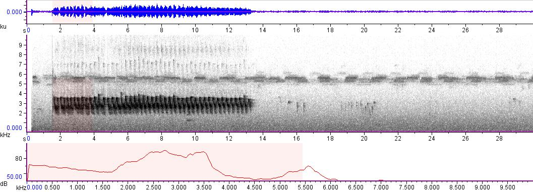 Sonogram of recording #AV 5007