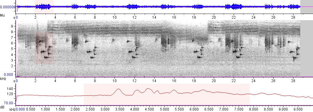 Sonogram of recording #AV 5037