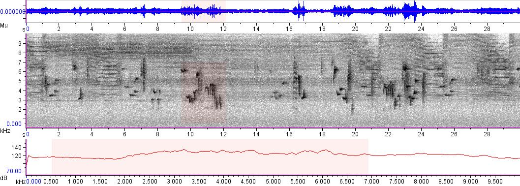 Sonogram of recording #AV 5038