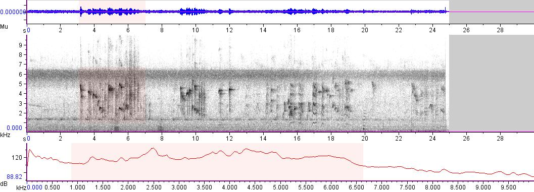 Sonogram of recording #AV 5069