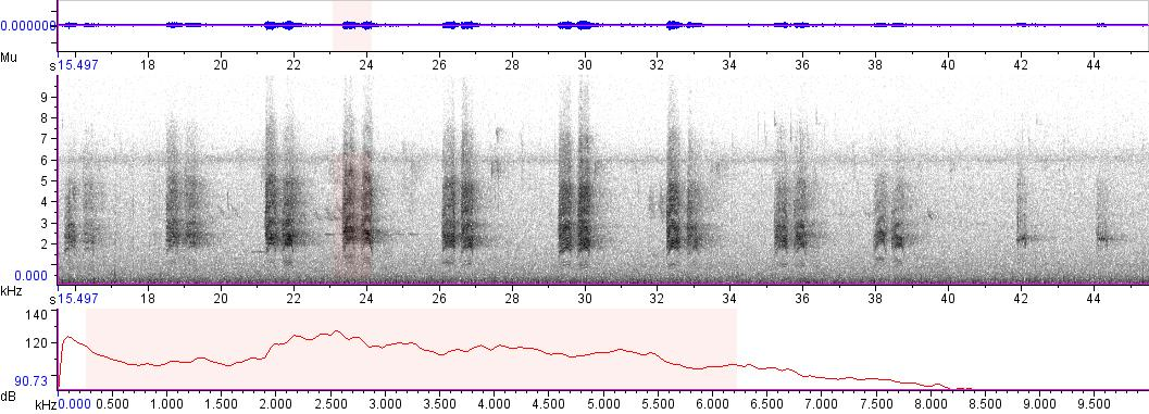 Sonogram of recording #AV 5083