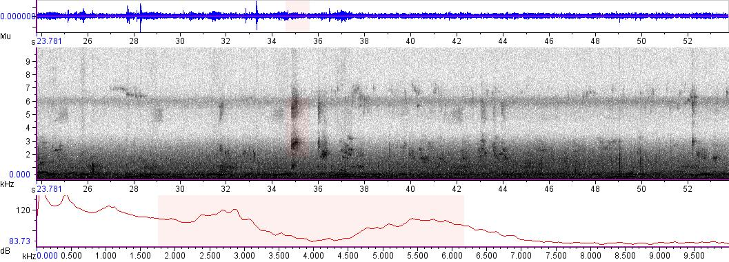 Sonogram of recording #AV 5096