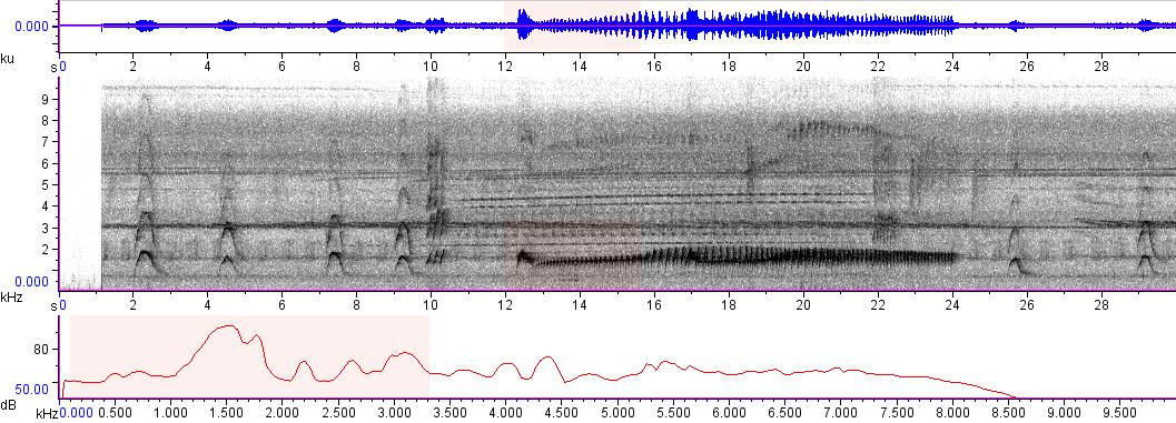 Sonogram of recording #AV 5114