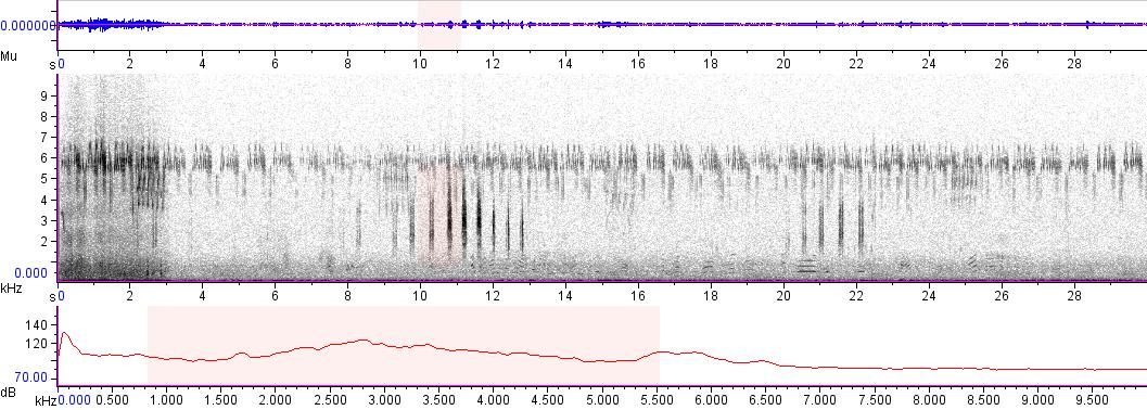 Sonogram of recording #AV 5127