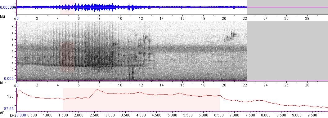 Sonogram of recording #AV 5161