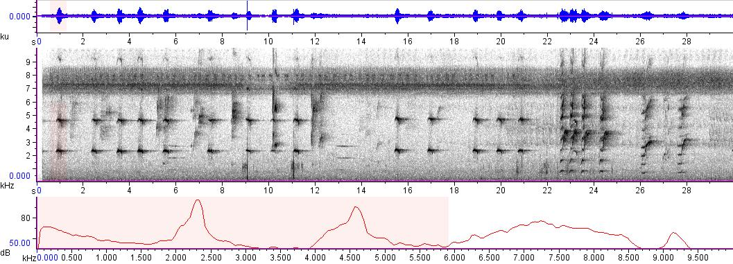 Sonogram of recording #AV 5233