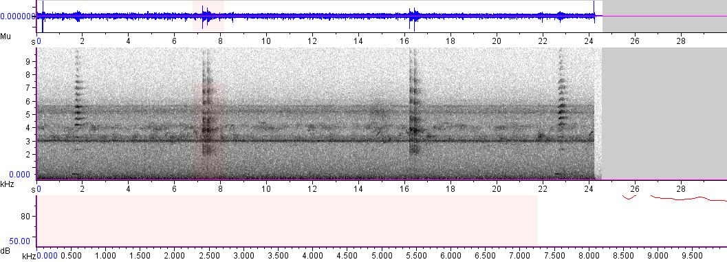 Sonogram of recording #AV 5240