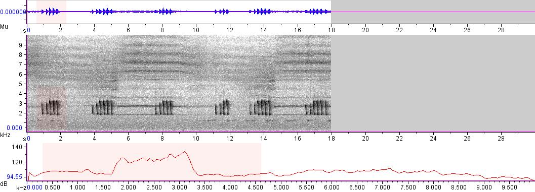 Sonogram of recording #AV 5245