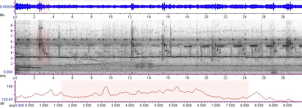 Sonogram of recording #AV 5261
