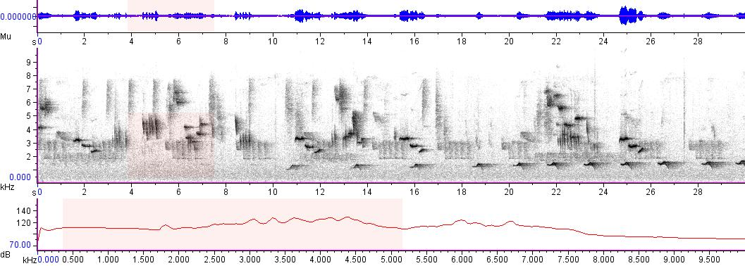 Sonogram of recording #AV 5263