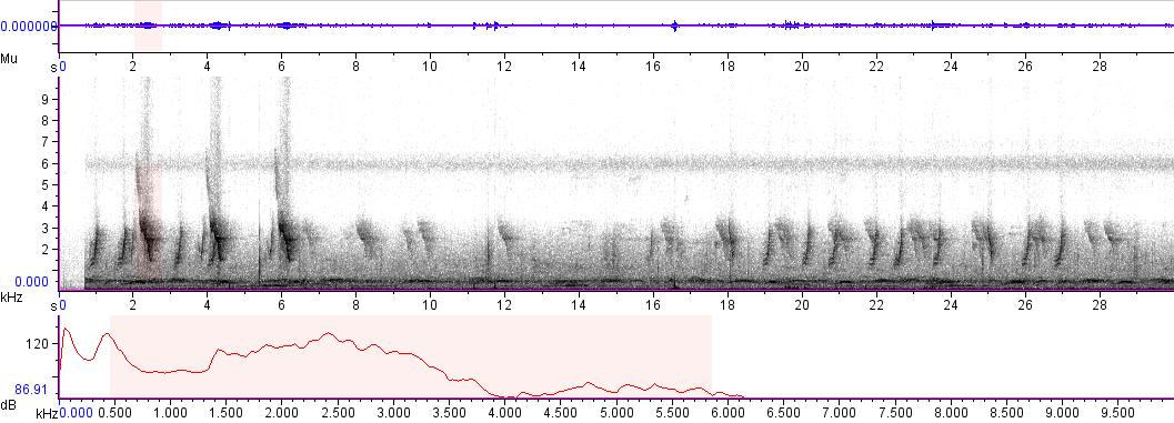 Sonogram of recording #AV 5295