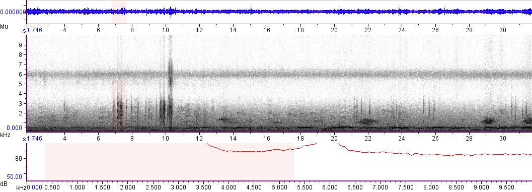 Sonogram of recording #AV 5298