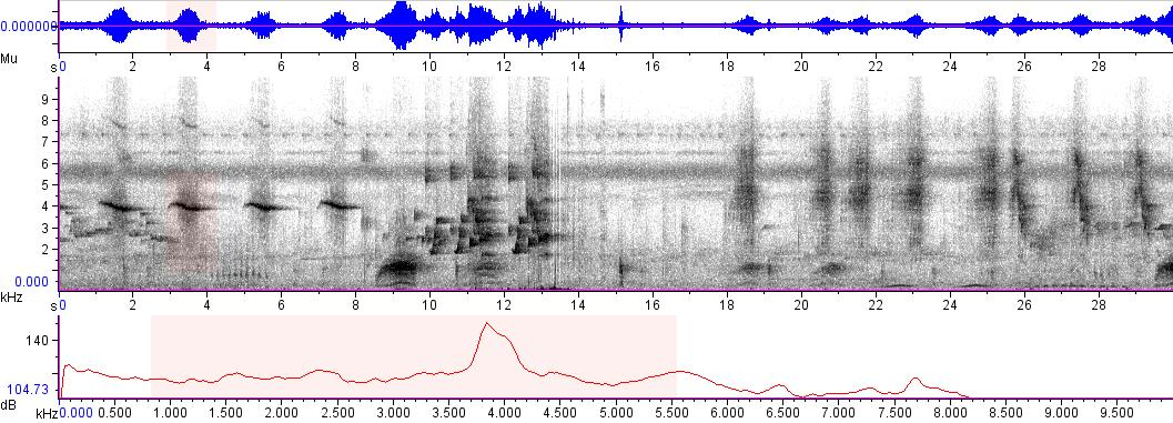Sonogram of recording #AV 5301