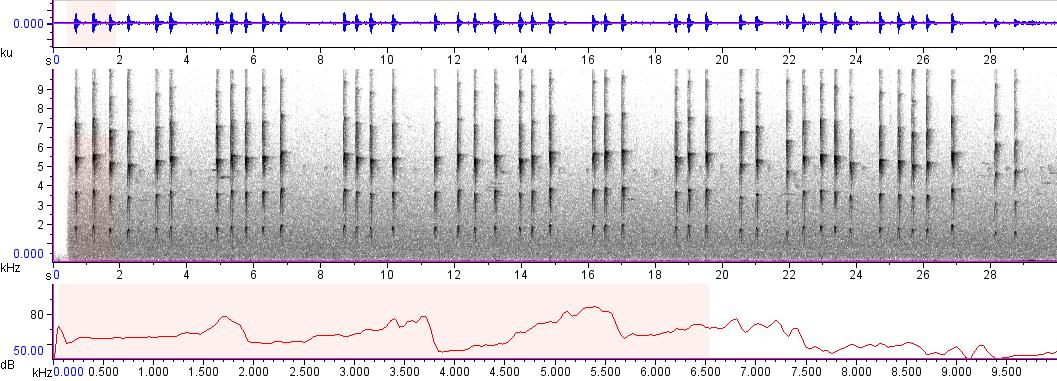 Sonogram of recording #AV 5319