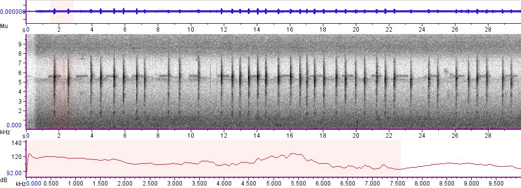 Sonogram of recording #AV 5367