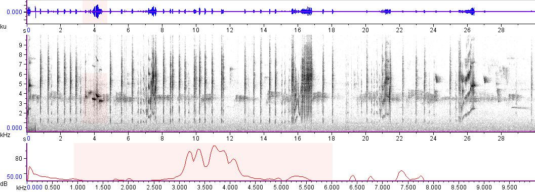 Sonogram of recording #AV 5369