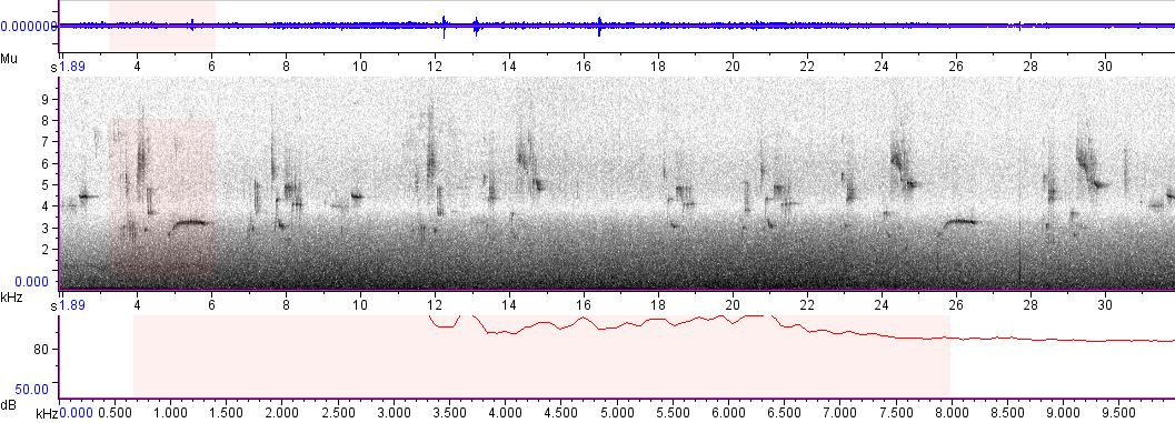 Sonogram of recording #AV 5370