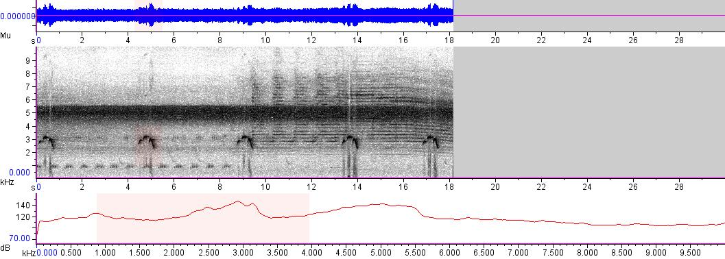 Sonogram of recording #AV 5399
