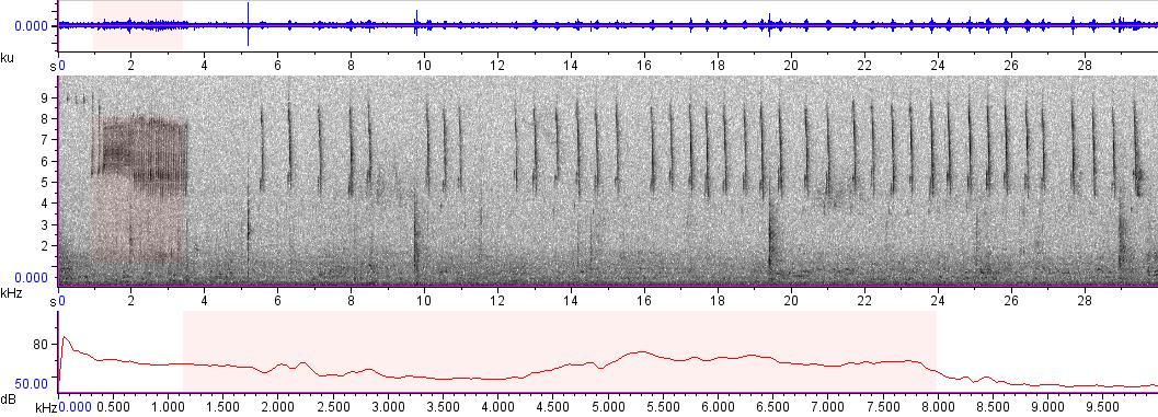 Sonogram of recording #AV 5417