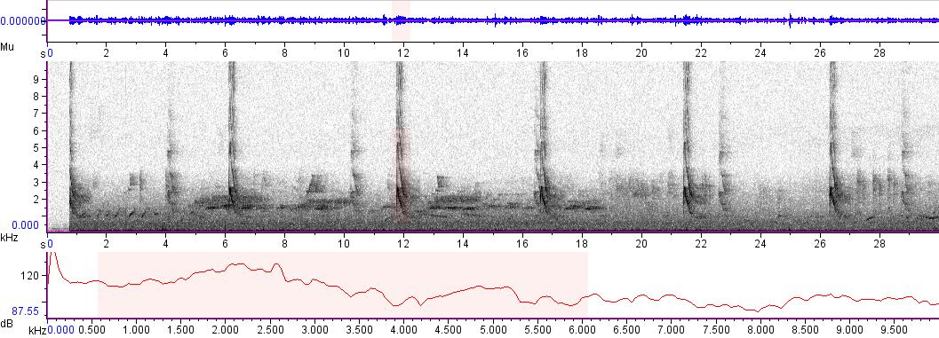 Sonogram of recording #AV 5456