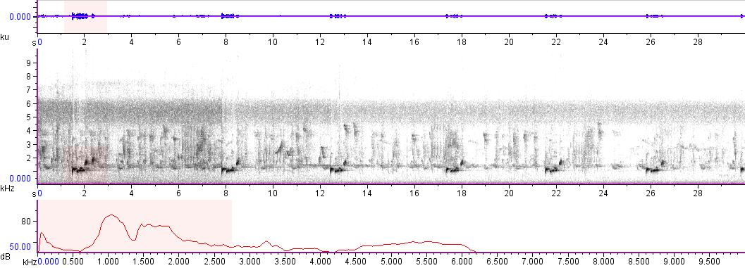 Sonogram of recording #AV 5529
