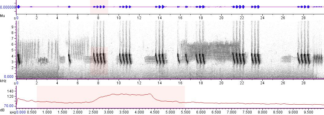 Sonogram of recording #AV 5551
