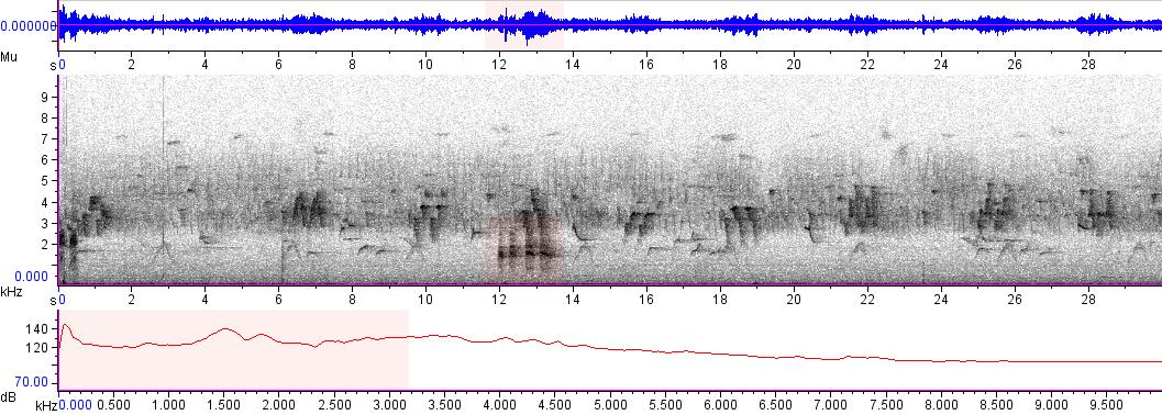 Sonogram of recording #AV 5567
