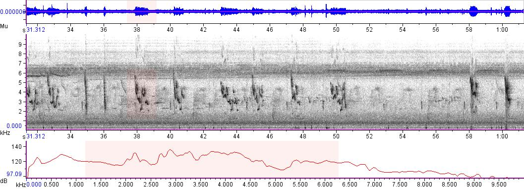 Sonogram of recording #AV 5571