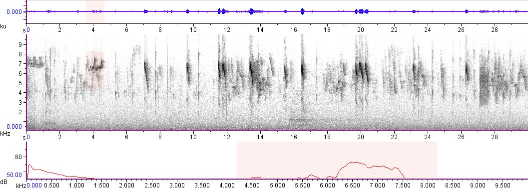 Sonogram of recording #AV 5593