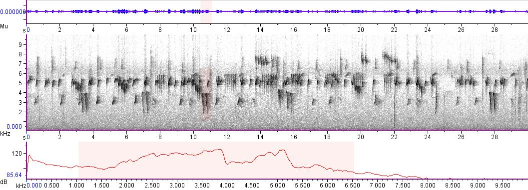 Sonogram of recording #AV 5600