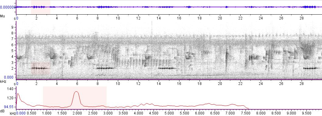 Sonogram of recording #AV 5625