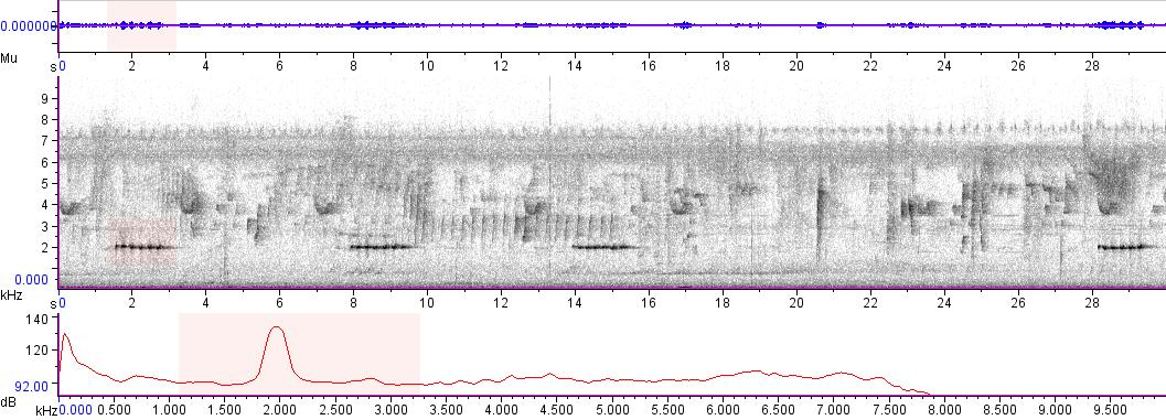 Sonogram of recording #AV 5626