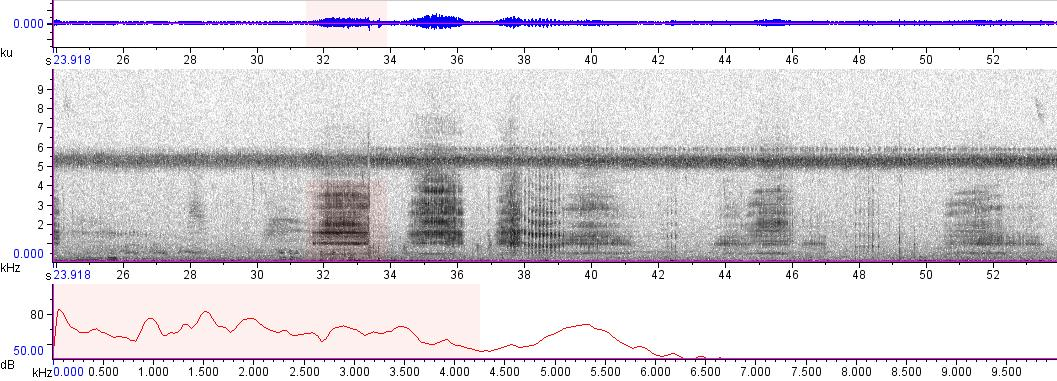 Sonogram of recording #AV 5645