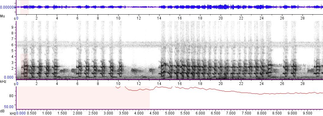 Sonogram of recording #AV 5650