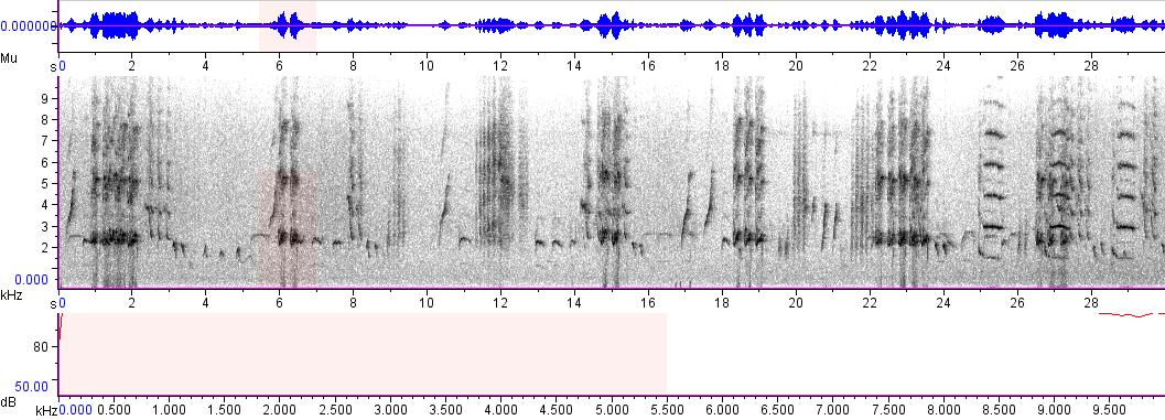 Sonogram of recording #AV 5662